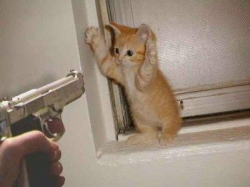 Cat Thief- Funny picture